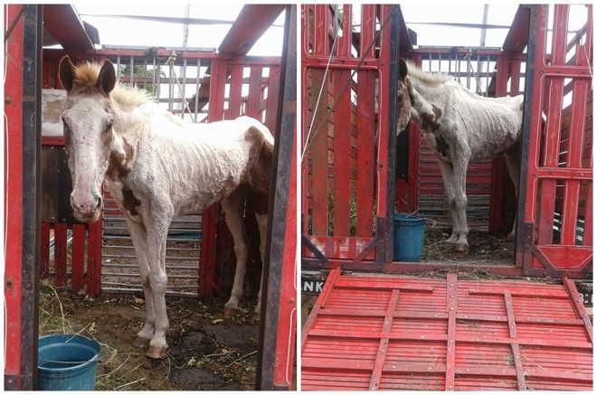 RJ saofrancisco cavalo edbb1