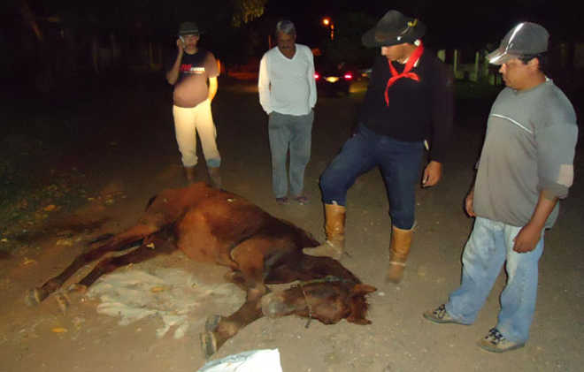 RS CachoeiraDoSul cansado carroca cavalo desmaia