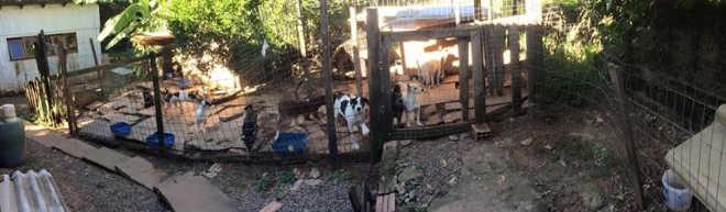 Protetores organizam feira de adoção para cães e gatos de idosa espancada em São Leopoldo, RS