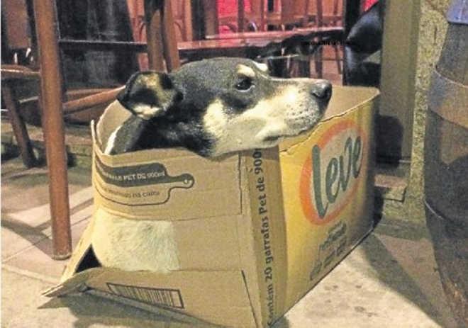 Bar de São Leopoldo (RS) acolhe animais e dá exemplo de respeito