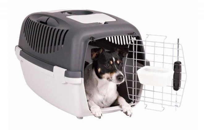 Prefeito sanciona lei que permite o transporte de cães e gatos em ônibus de Florianópolis, SC