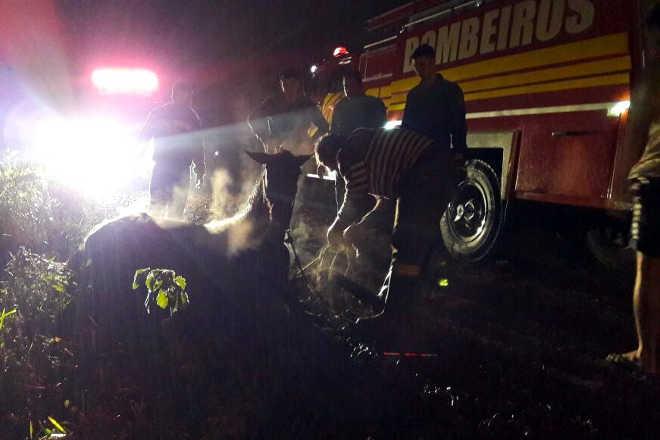 Cavalo é resgatado pelo Corpo de Bombeiros após cair em vala em Forquilhinha, SC