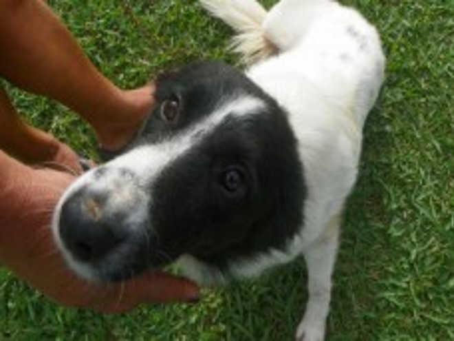 Domingo é dia de adotar um amigo de quatro patas em Itajaí, SC