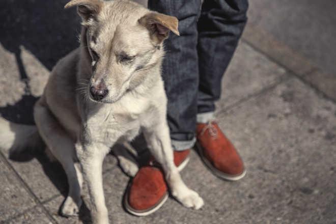 Juiz entende que cão não é objeto e remete disputa por animal para Vara de Família