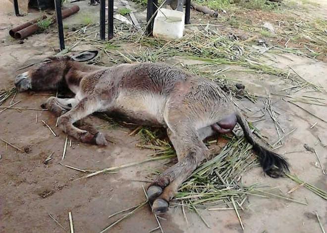 Morre animal que estava agonizando no pátio de Prefeitura de Estância, SE