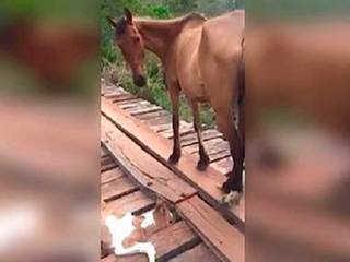 """Ele buzinou para que a égua saísse do caminho. Até se dar conta da razão pela qual ela """"chorava"""""""
