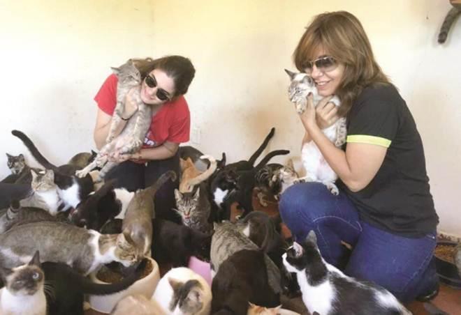 SP Araraquara santuario gatos projeto