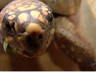 Centro de Recuperação de Animais Silvestres de Araçatuba (SP) está lotado