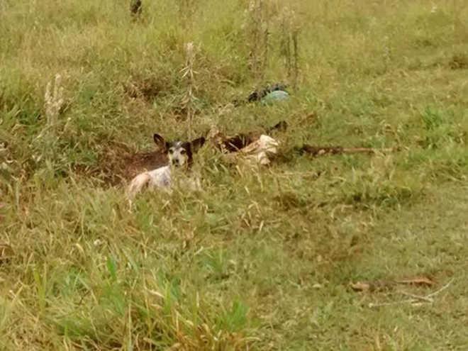 Cão fica ao lado de tutor encontrado morto em terreno de Assis, SP