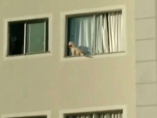Cachorro espera quatro horas por socorro em beiral de janela em prédio