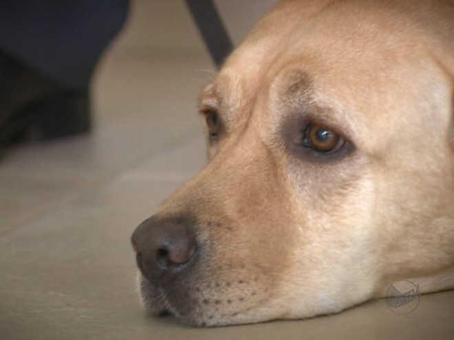 Polícia Civil recebe doações para cães de famílias carentes em Bebedouro, SP