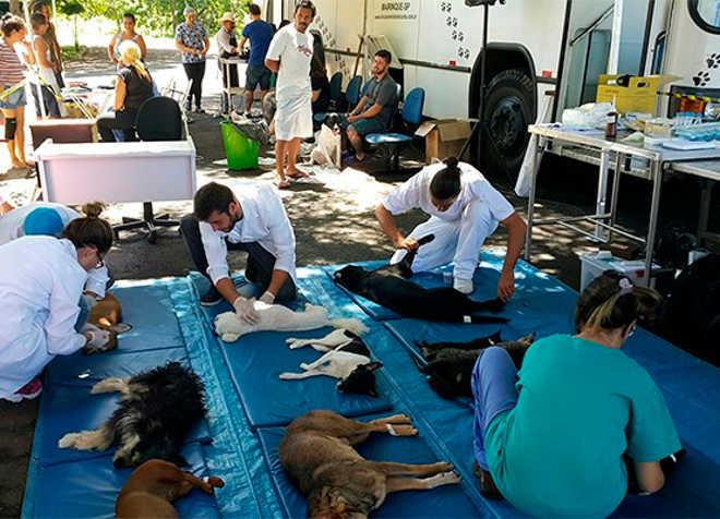 Prefeitura de Campinas (SP) castrou 885 animais na Vila Boa Vista em uma semana