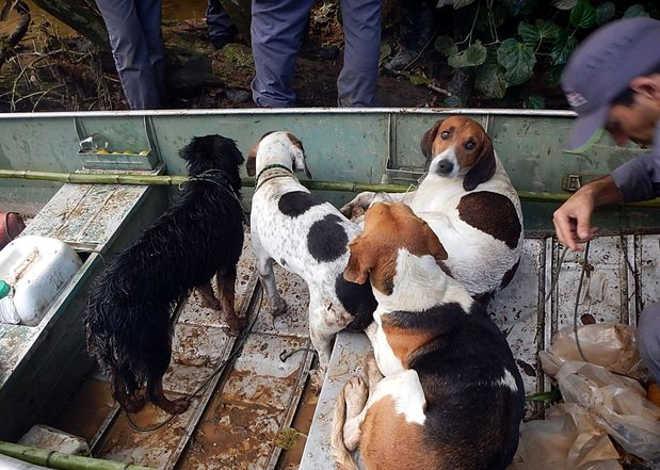 Dupla é presa em flagrante por caça de animal silvestre e maus-tratos