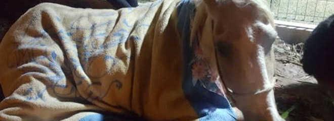 Cavalo morre após ficar agonizando em terreno de Ferraz de Vasconcelos (SP), diz ONG