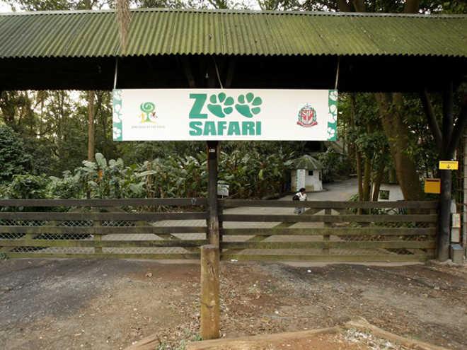 Funcionária do Zoo Safári fica ferida e é operada após ser mordida por anta, em SP