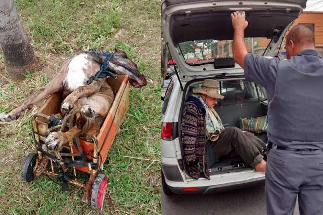 Idoso de 70 anos recolhia os cães de rua, abusava sexualmente e depois matava os animais