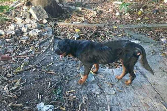 Gravíssimos problemas no abrigo municipal de animais de Pindamonhangaba, SP