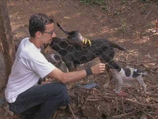 Justiça determina que prefeitura de Piraju (SP) desative abrigo de animais