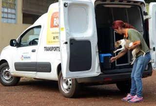 Canil Municipal de Sertãozinho (SP) cria Central de Resgate de Animais, com funcionamento 24 horas