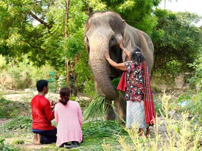 O lindo momento em que uma elefanta que carregou turistas a vida toda ganha a chance de se aposentar
