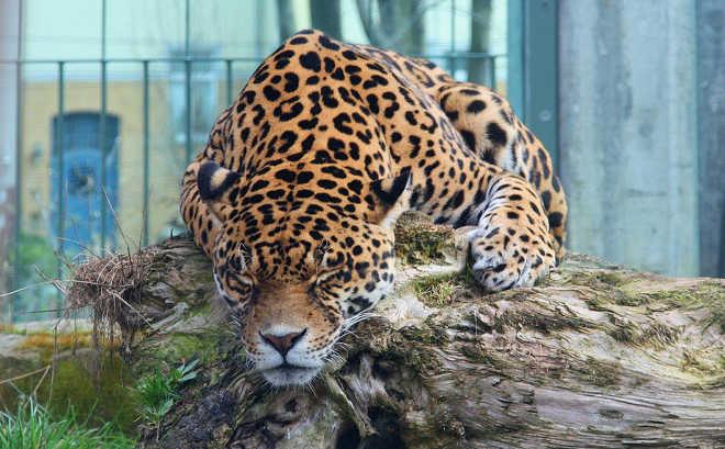 A verdade chocante sobre o que acontece com os animais 'excedentes' nos zoológicos