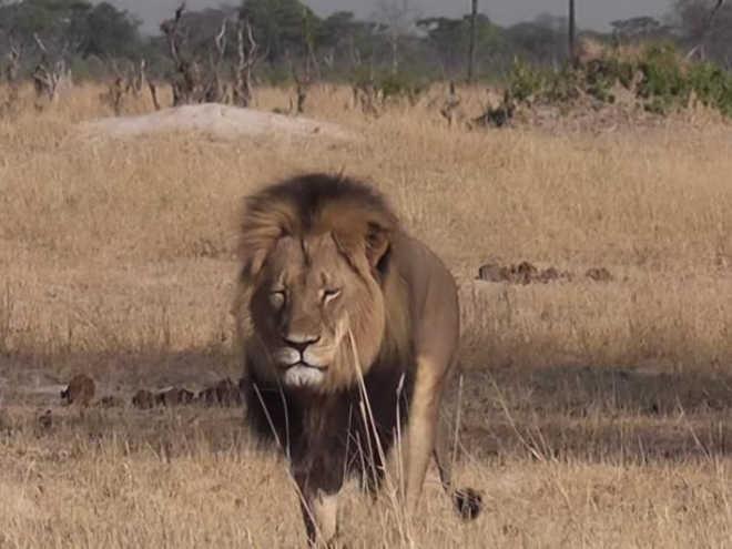 Zimbabué vai vender animais selvagens para enfrentar seca