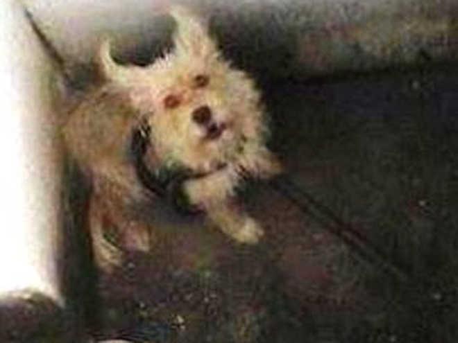 Comissão da OAB resgata cadela que estava há cinco dias sem comida e água em Maceió, AL