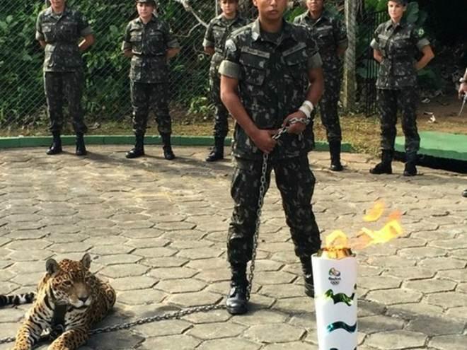 Especialistas criticam exposição de onça morta; Exército nega estresse