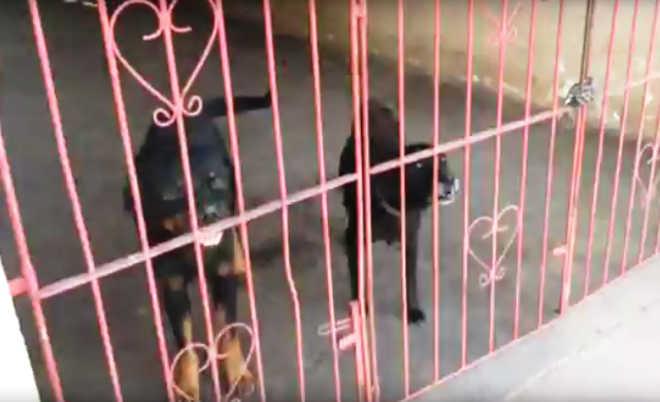 ONG denuncia maus-tratos a animais do canil da Guarda Municipal em Macapá, AP