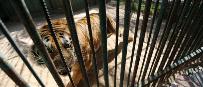 Morte de 70 animais em 5 meses faz Argentina repensar zoológicos