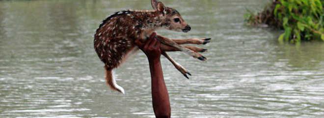 O incrível momento em que um garoto arrisca sua vida para salvar um cervo preso em inundação mortal