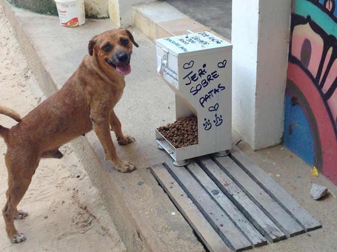 Comedouros comunitários para animais são distribuídos nas ruas de Jericoacoara, CE