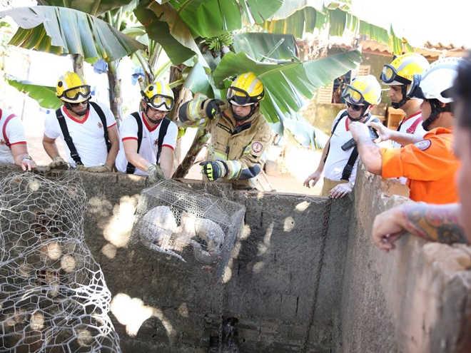 Bombeiros resgatam cachorrinho em Ceilândia, DF