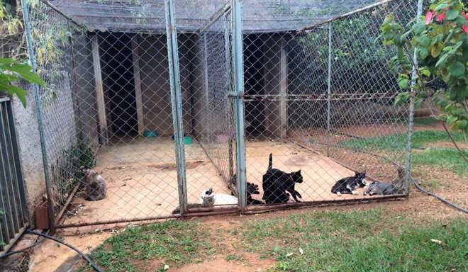 Médica assassinada no DF cuidava de animais. Grupo fará campanha de adoção