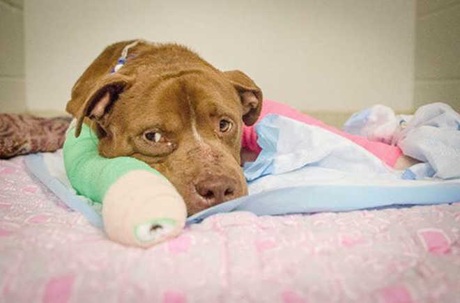 Cão resgatado de rinha recebe seu primeiro banho quente