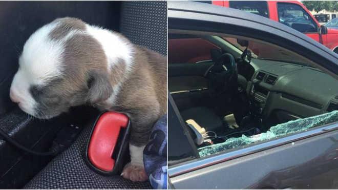Polícia quebra vidro de carro para salvar filhote de cachorro deixado lá dentro