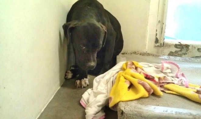 Cadela de abrigo estava tão assustada para passear, que precisaram carregá-la para fora