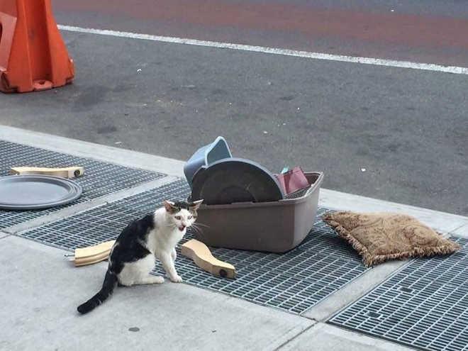 Gato é abandonado na rua junto com sua caixa de areia e seus pertences