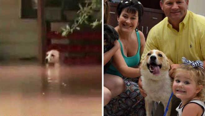 Cachorra acorrentada durante enchente é adotada pelo homem que a salvou