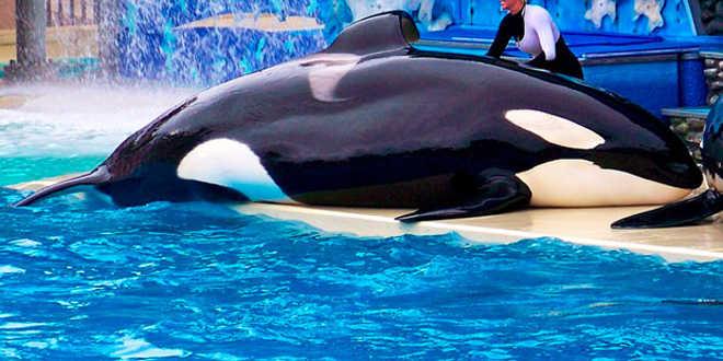 A vida selvagem dos oceanos deve ficar longe do turismo