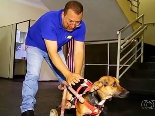 Abandonado após ficar sem andar, cão é salvo por policiais em Rio Verde, GO