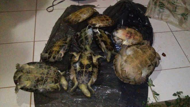 Batalhão Ambiental prende caçador em flagrante e evita abate de nove tartarugas