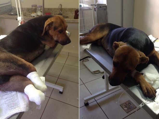 MP apura ataque a cachorro que foi golpeado por foice, em São Simão, GO