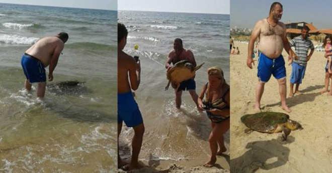 Tartaruga arrastada para a praia. A razão? É simplesmente revoltante!