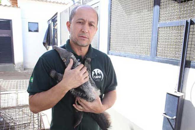 Presença de animais silvestres em área urbana preocupa IEF em Uberlândia, MG