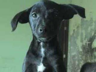 Cães e gatos disponíveis para adoção correm risco de despejo na Pampulha, em BH