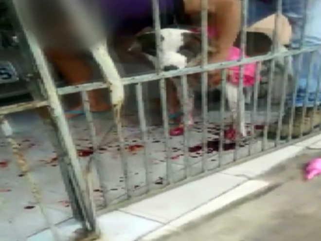Polícia Militar atira em cachorro durante ocorrência em Varginha, MG