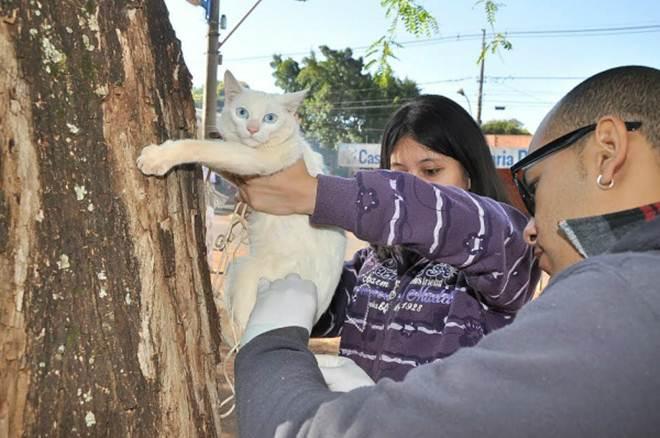 4.337 cães e gatos foram vacinados em Dourados, MS