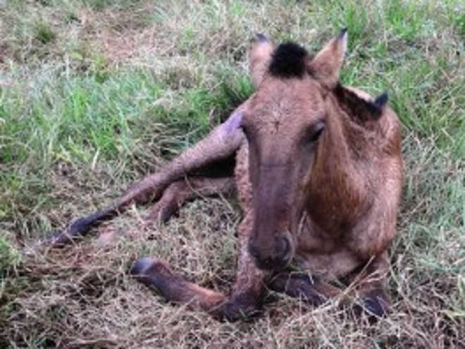 Policia Civil identifica tutor de cavalo que sofreu maus-tratos e foi abandonado em Ivinhema, MS