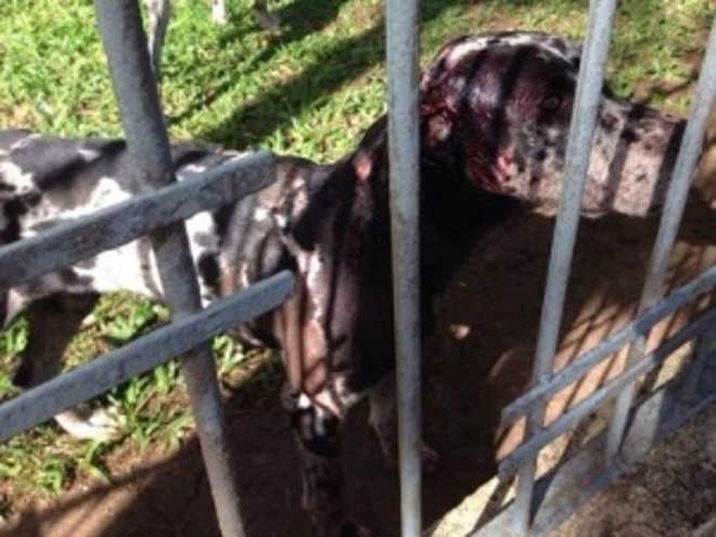 Veterinário é denunciado por maltratar cães com golpes de vassoura, em Ponta Porã, MS
